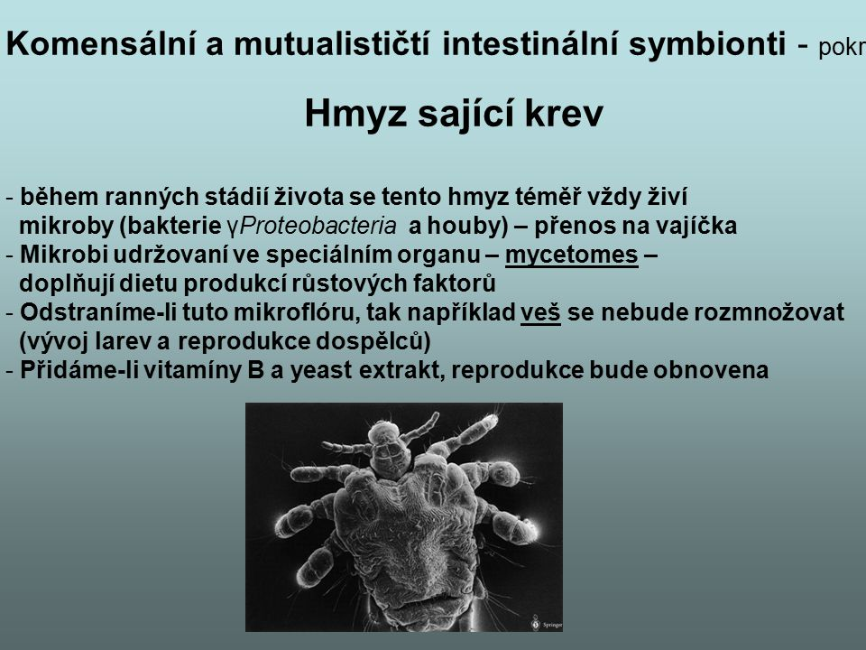 Komensální a mutualističtí intestinální symbionti - pokr
