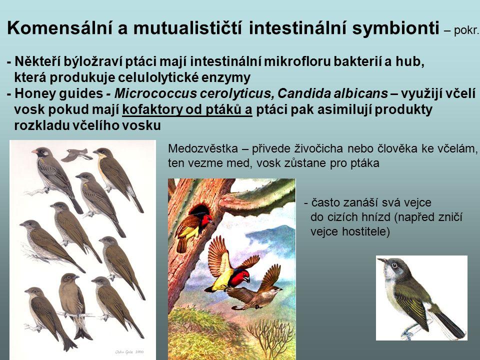 Komensální a mutualističtí intestinální symbionti – pokr.