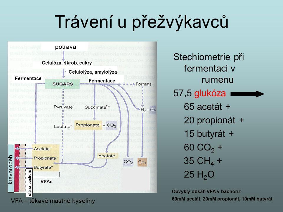 Trávení u přežvýkavců potrava Stechiometrie při fermentaci v rumenu