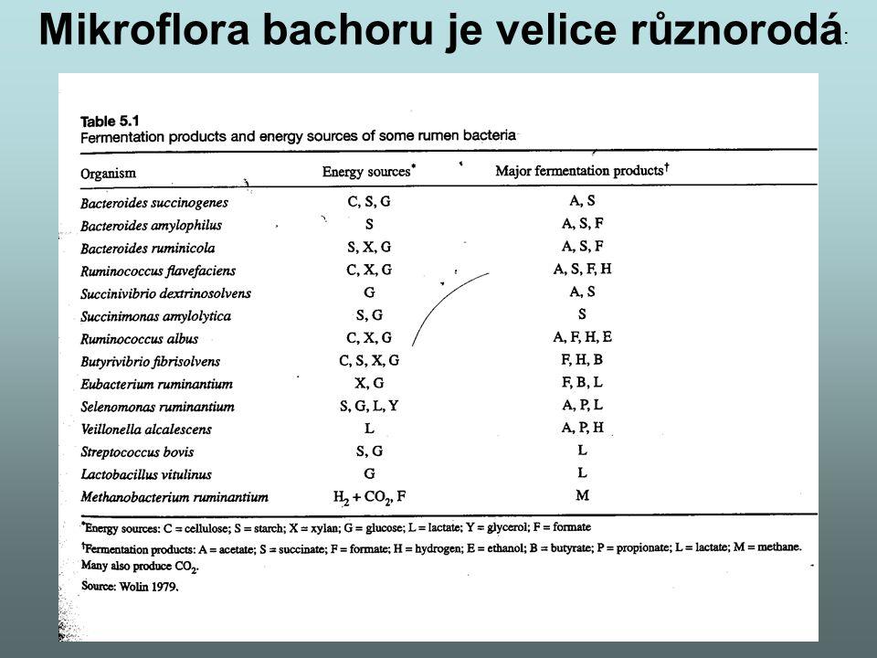 Mikroflora bachoru je velice různorodá: