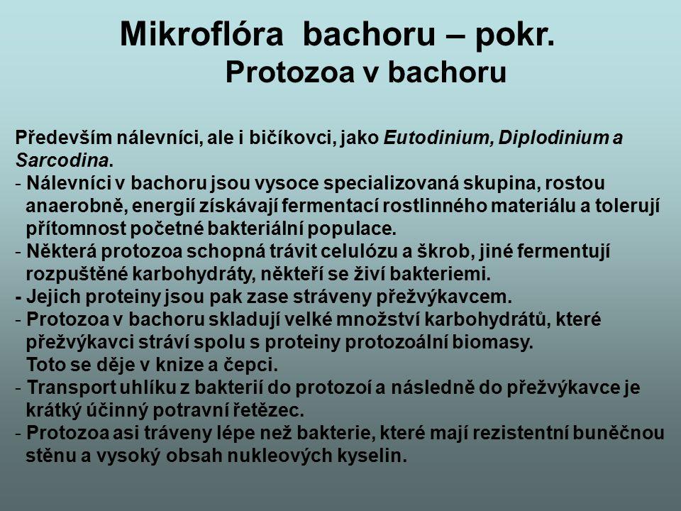 Mikroflóra bachoru – pokr.