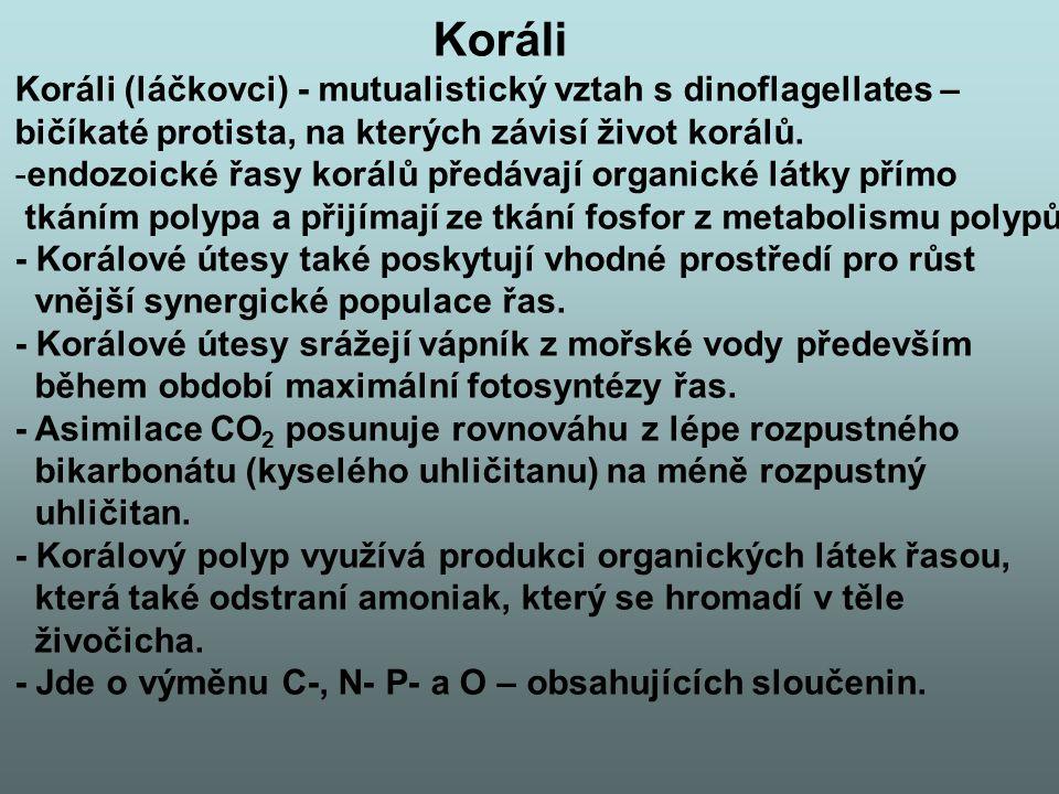 Koráli Koráli (láčkovci) - mutualistický vztah s dinoflagellates –