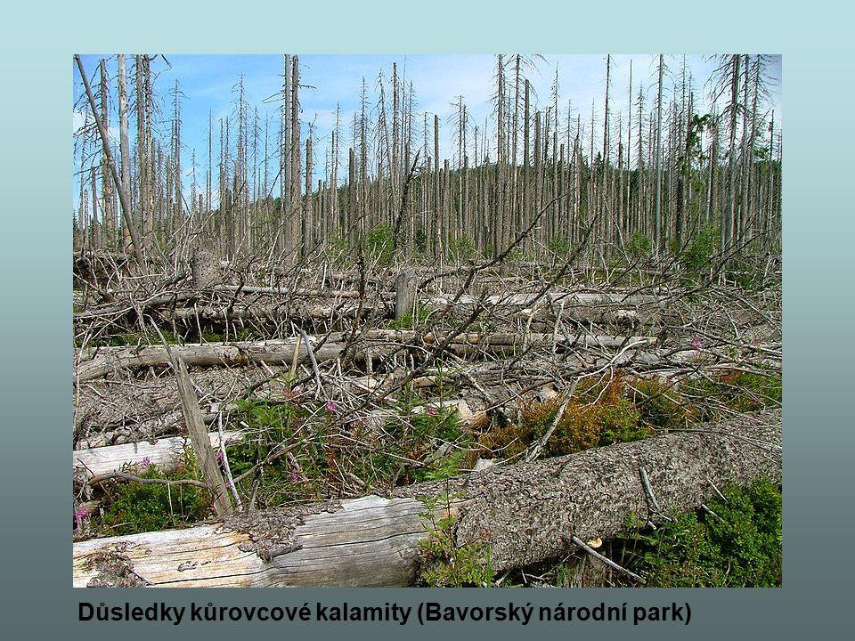 Důsledky kůrovcové kalamity (Bavorský národní park)