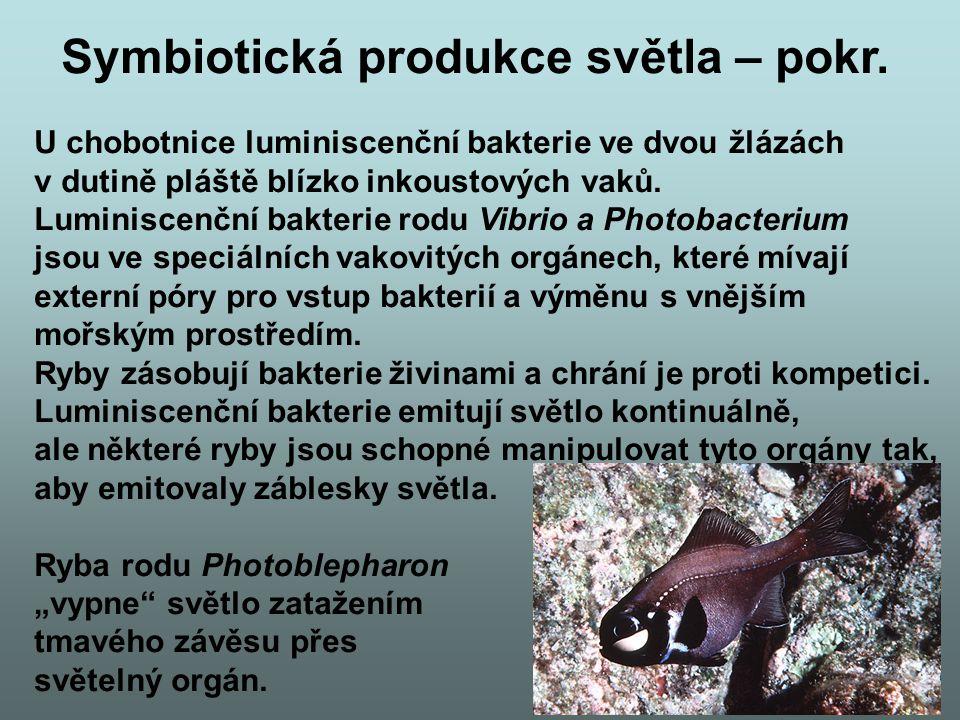 Symbiotická produkce světla – pokr.