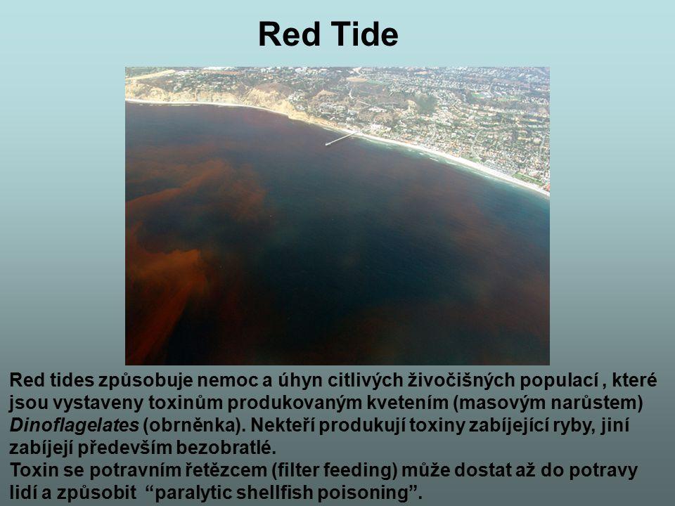Red Tide Red tides způsobuje nemoc a úhyn citlivých živočišných populací , které. jsou vystaveny toxinům produkovaným kvetením (masovým narůstem)