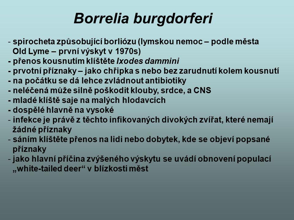 Borrelia burgdorferi spirocheta způsobující borliózu (lymskou nemoc – podle města. Old Lyme – první výskyt v 1970s)