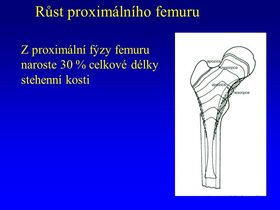 Růst proximálního femuru