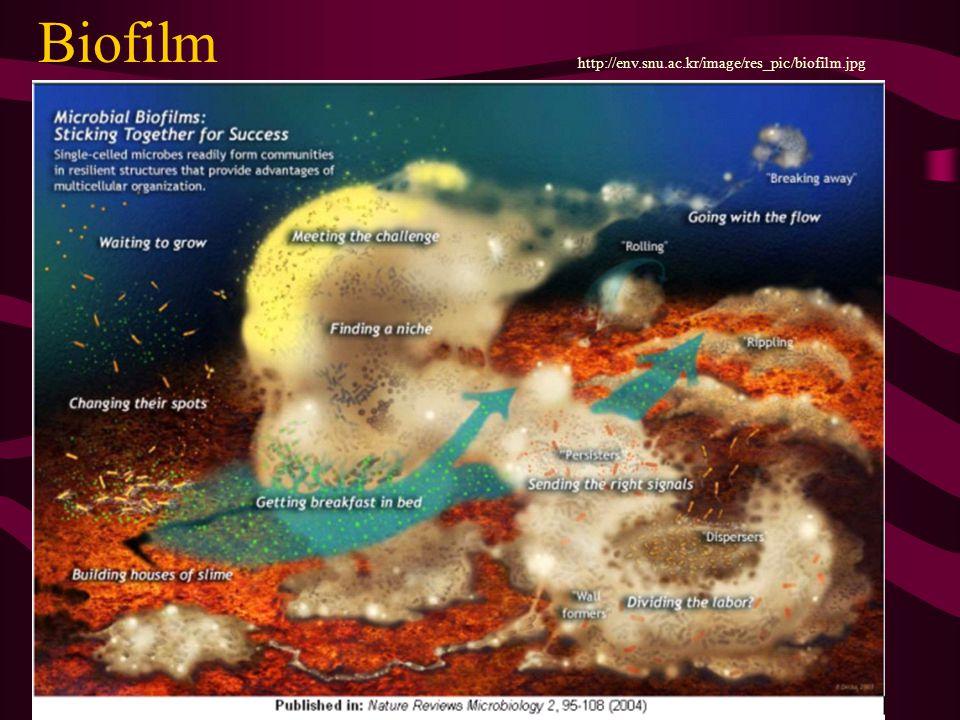Biofilm http://env.snu.ac.kr/image/res_pic/biofilm.jpg