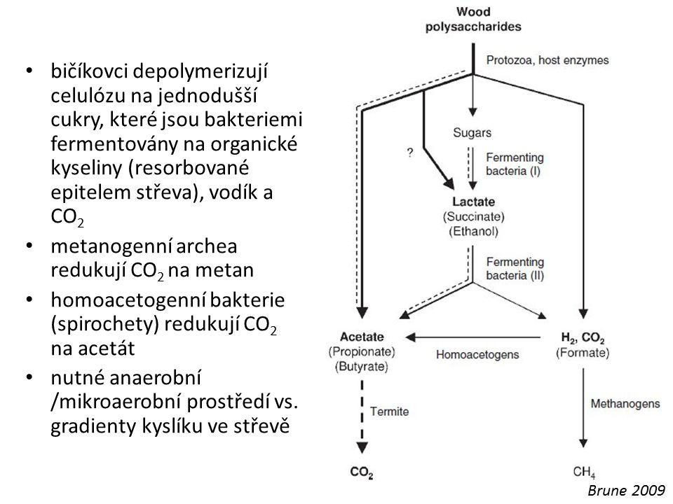 metanogenní archea redukují CO2 na metan