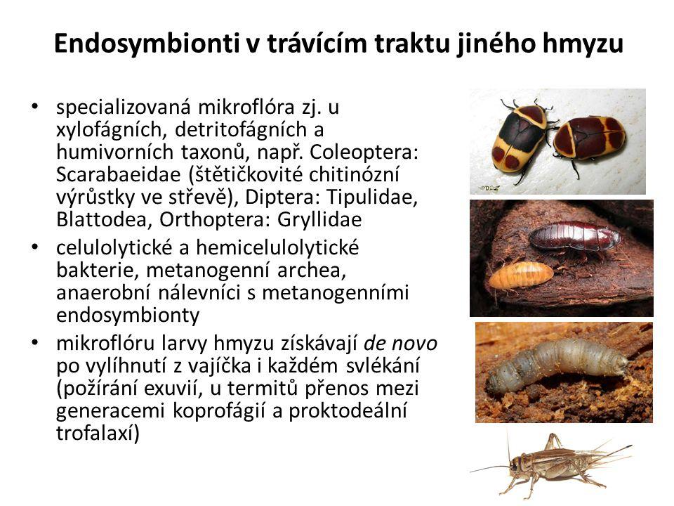 Endosymbionti v trávícím traktu jiného hmyzu