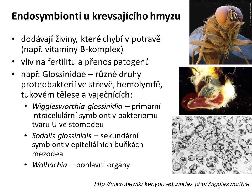 Endosymbionti u krevsajícího hmyzu