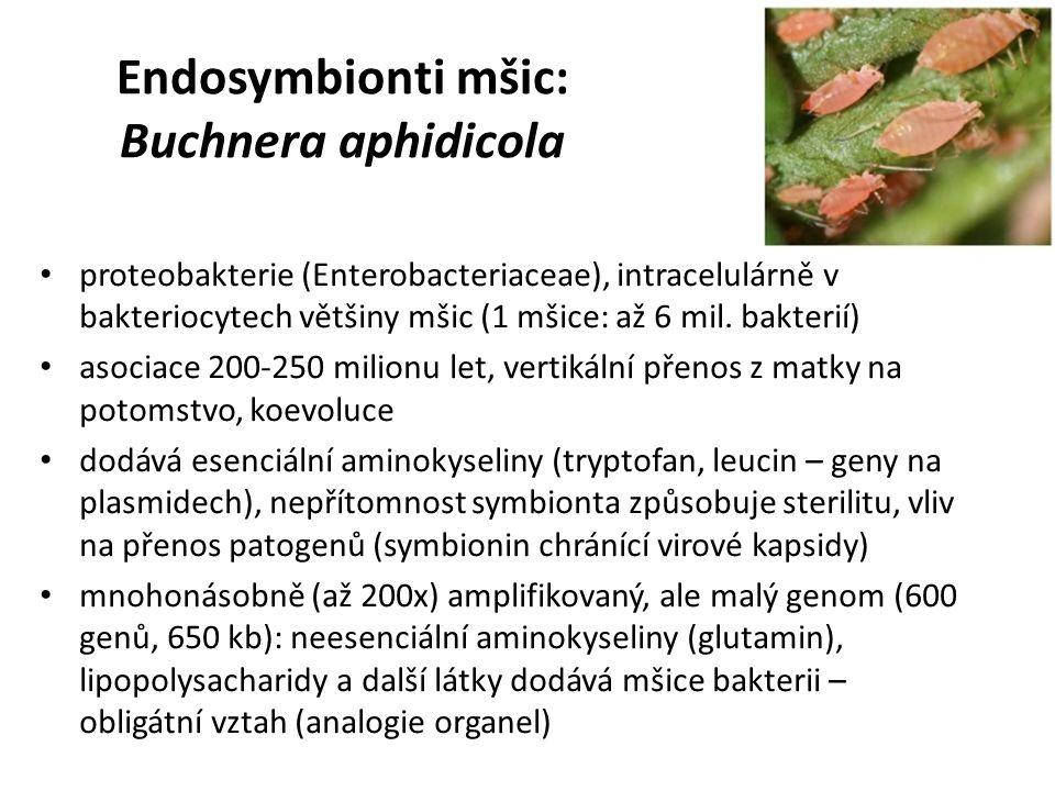 Endosymbionti mšic: Buchnera aphidicola