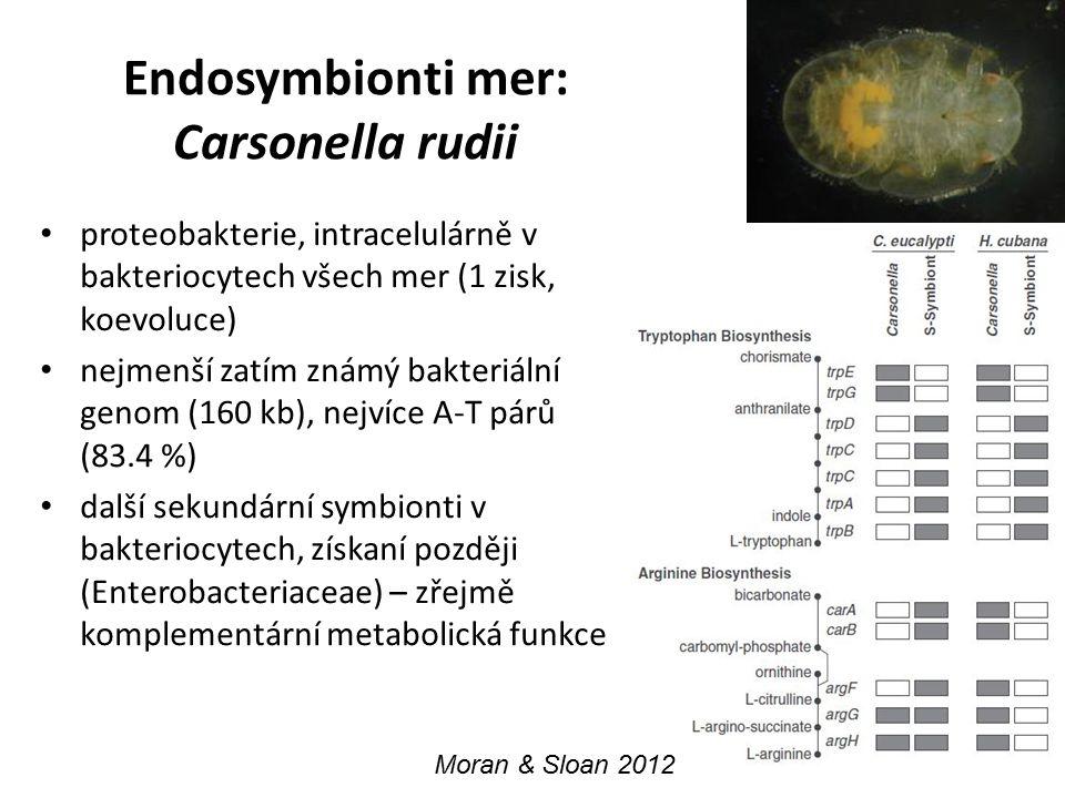 Endosymbionti mer: Carsonella rudii