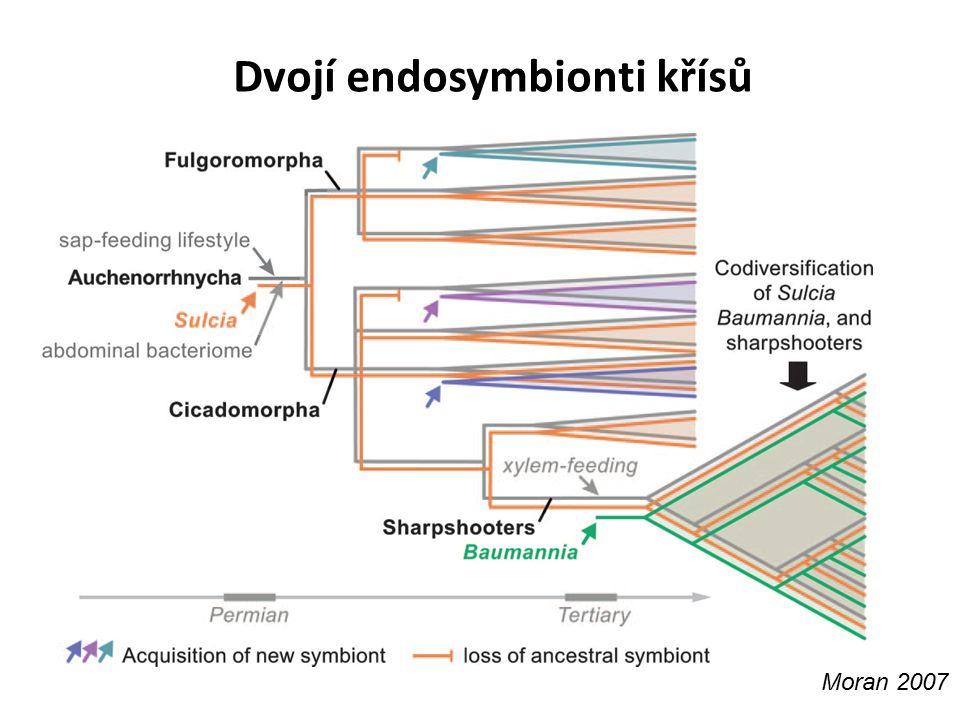 Dvojí endosymbionti křísů