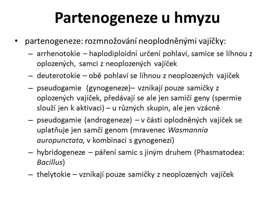 Partenogeneze u hmyzu partenogeneze: rozmnožování neoplodněnými vajíčky: