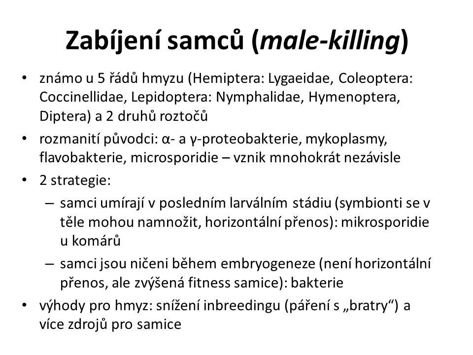 Zabíjení samců (male-killing)