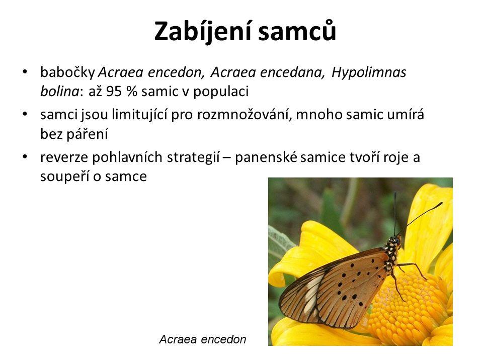 Zabíjení samců babočky Acraea encedon, Acraea encedana, Hypolimnas bolina: až 95 % samic v populaci.