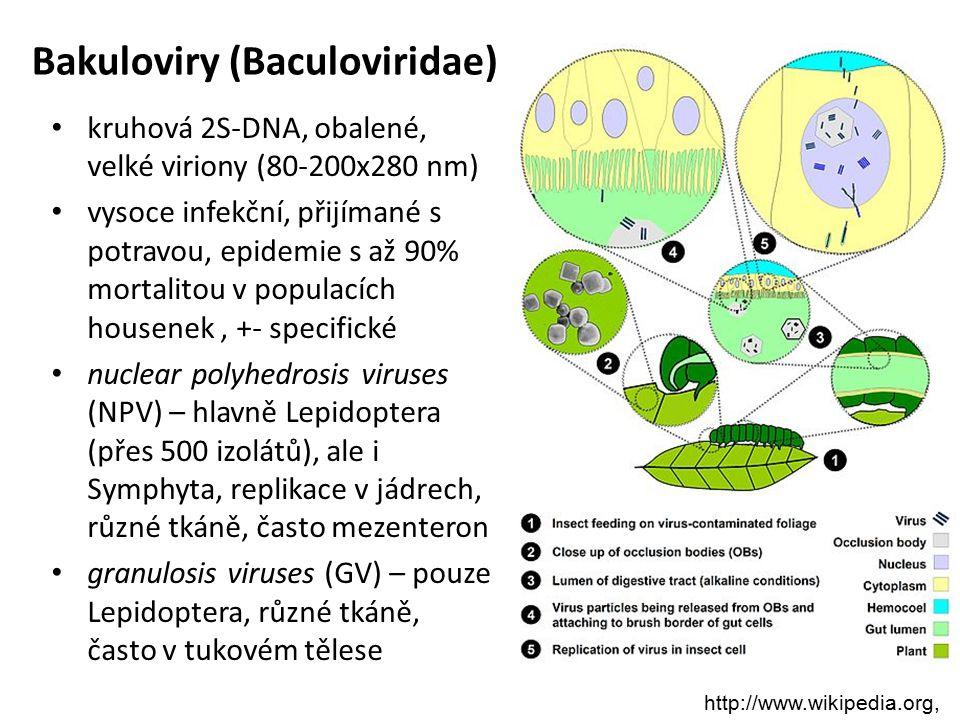 Bakuloviry (Baculoviridae)