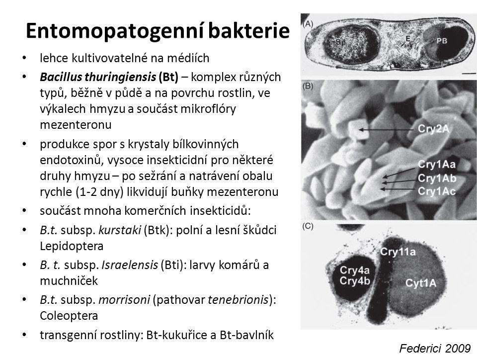 Entomopatogenní bakterie