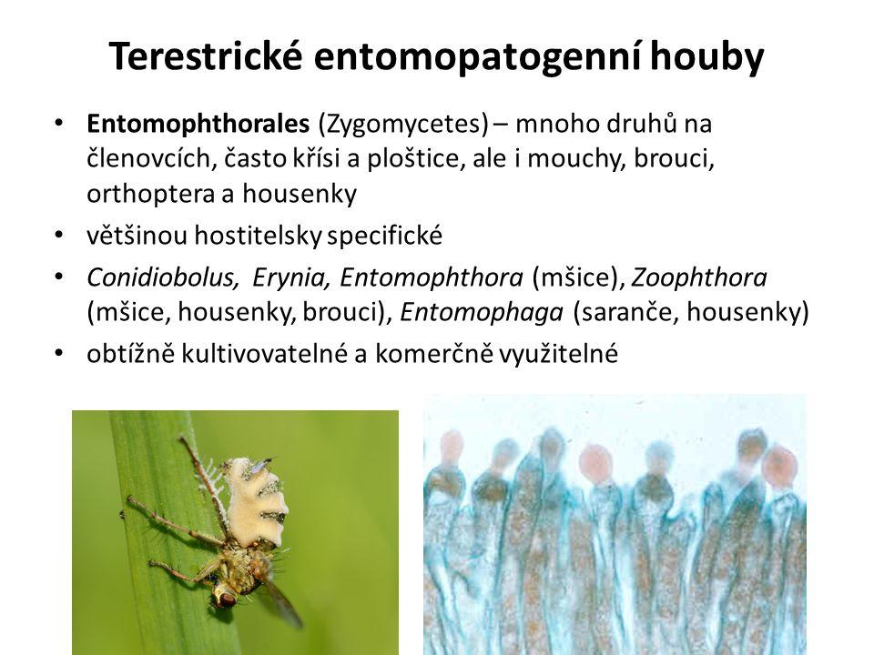 Terestrické entomopatogenní houby