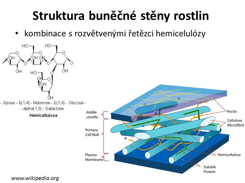 Struktura buněčné stěny rostlin