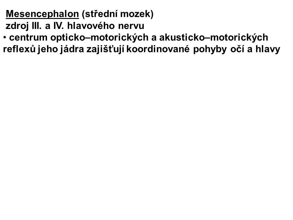 Mesencephalon (střední mozek)