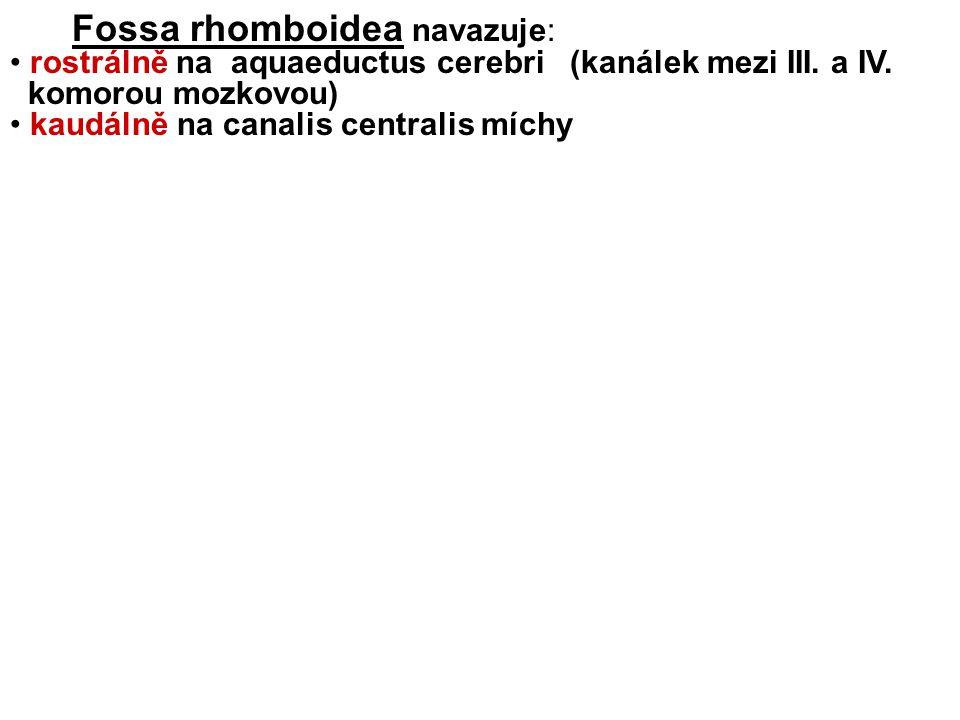 Fossa rhomboidea navazuje:
