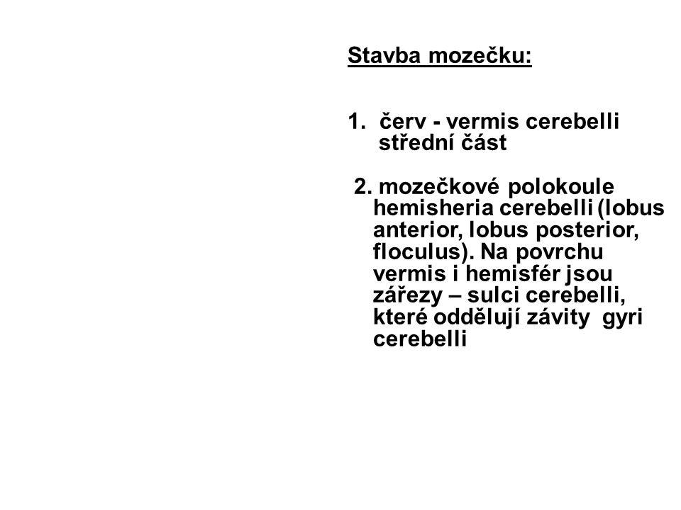 Stavba mozečku: červ - vermis cerebelli. střední část.