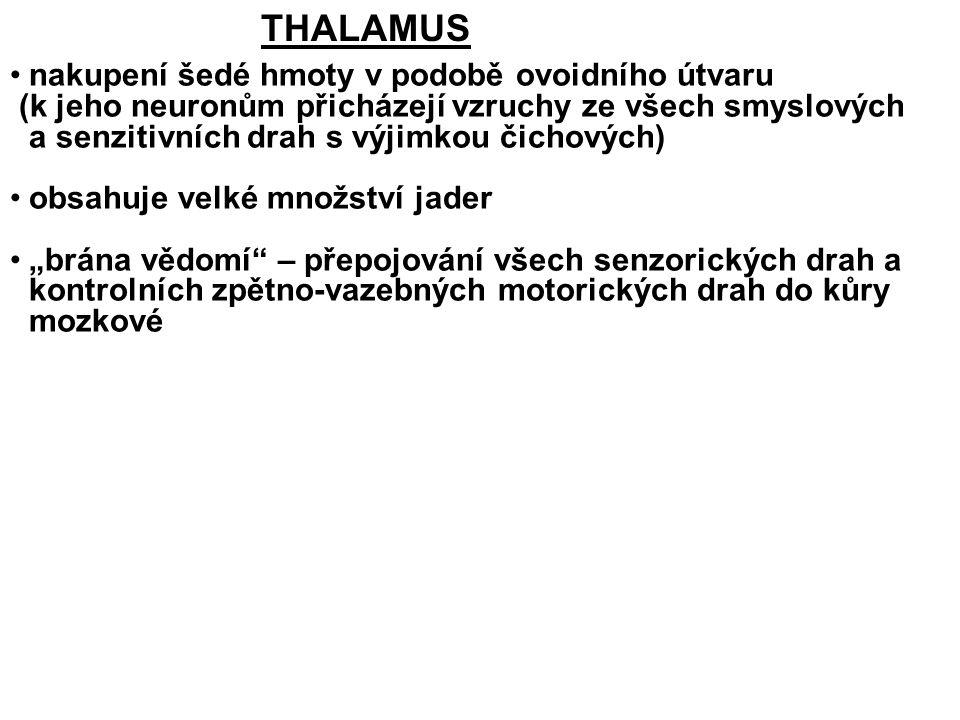 THALAMUS nakupení šedé hmoty v podobě ovoidního útvaru