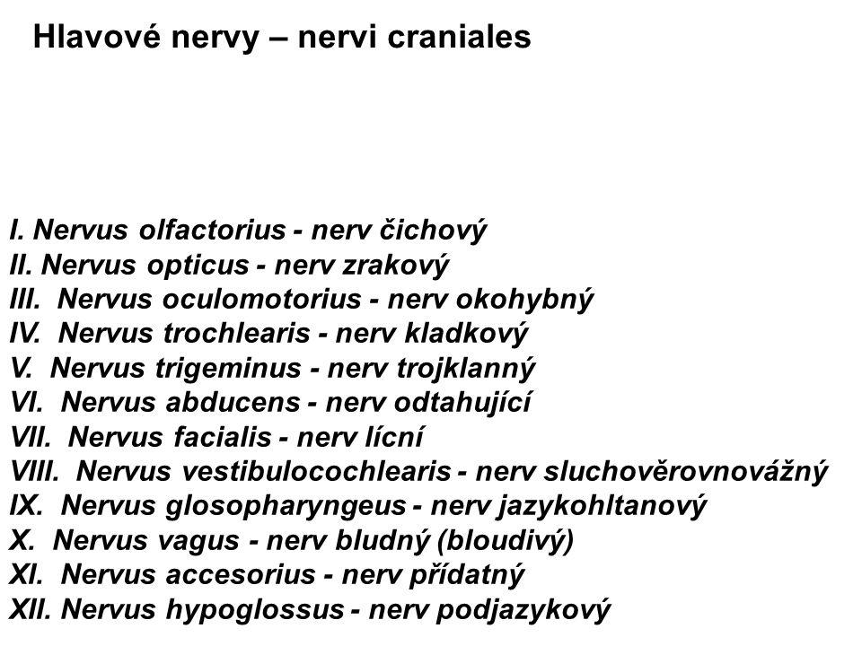 Hlavové nervy – nervi craniales