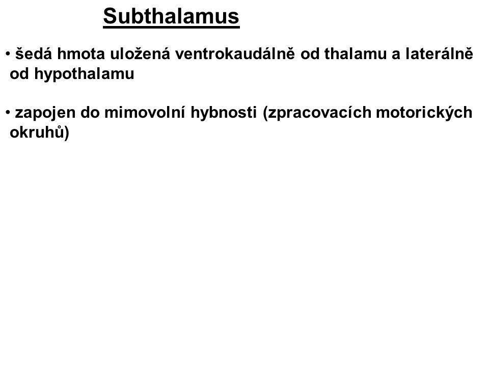 Subthalamus šedá hmota uložená ventrokaudálně od thalamu a laterálně od hypothalamu.