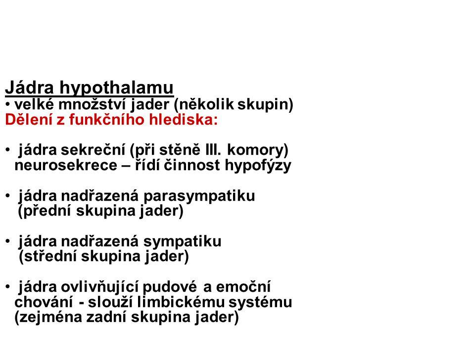 Jádra hypothalamu velké množství jader (několik skupin)