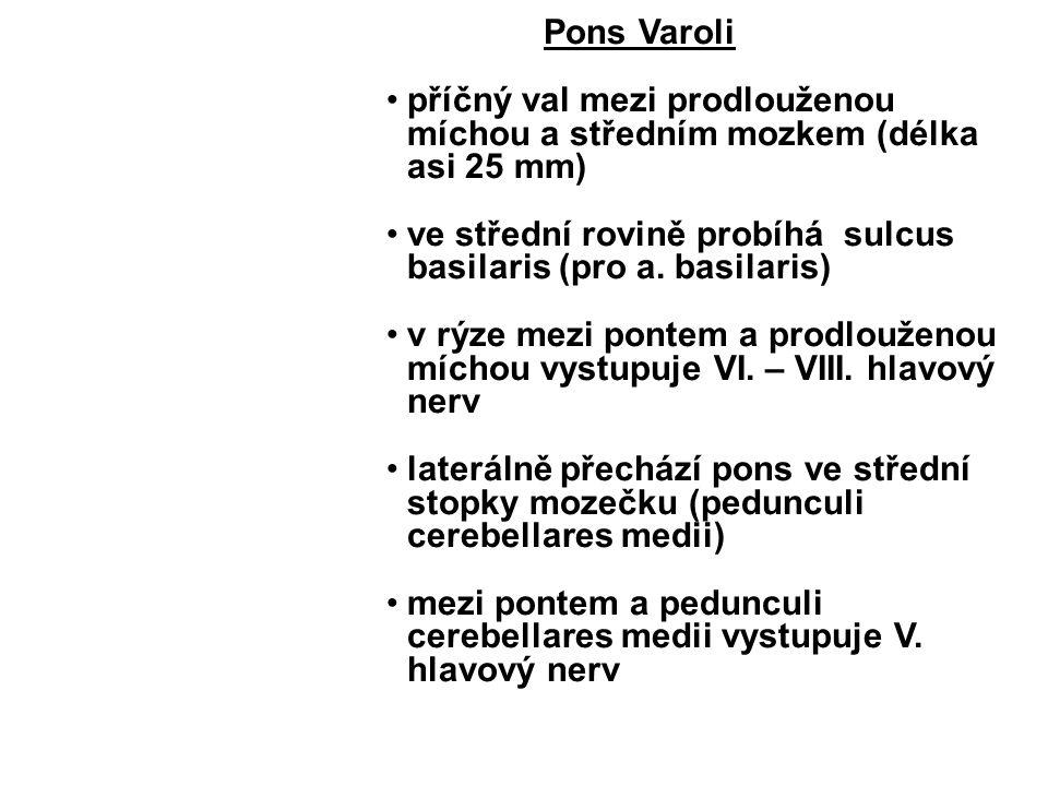 Pons Varoli příčný val mezi prodlouženou míchou a středním mozkem (délka asi 25 mm) ve střední rovině probíhá sulcus basilaris (pro a. basilaris)