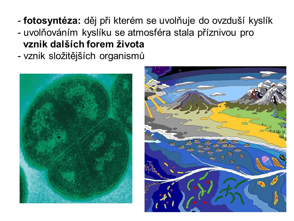 - fotosyntéza: děj při kterém se uvolňuje do ovzduší kyslík - uvolňováním kyslíku se atmosféra stala příznivou pro vznik dalších forem života - vznik složitějších organismů