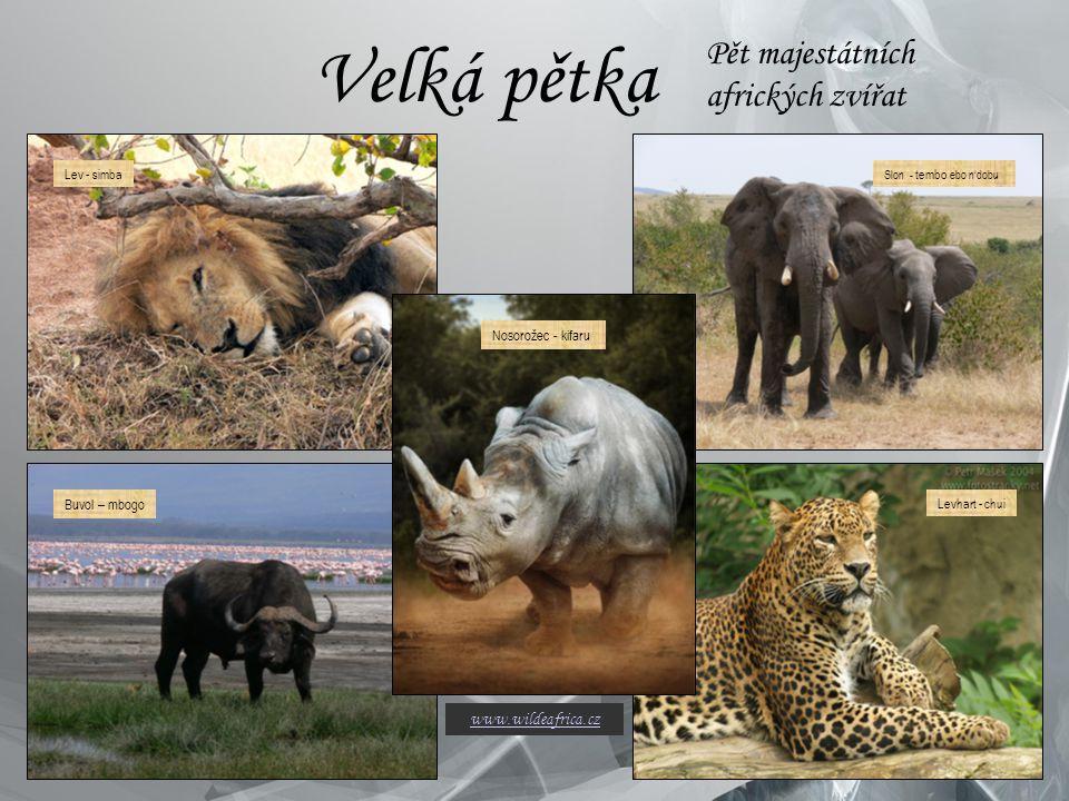 Velká pětka Pět majestátních afrických zvířat www.wildeafrica.cz