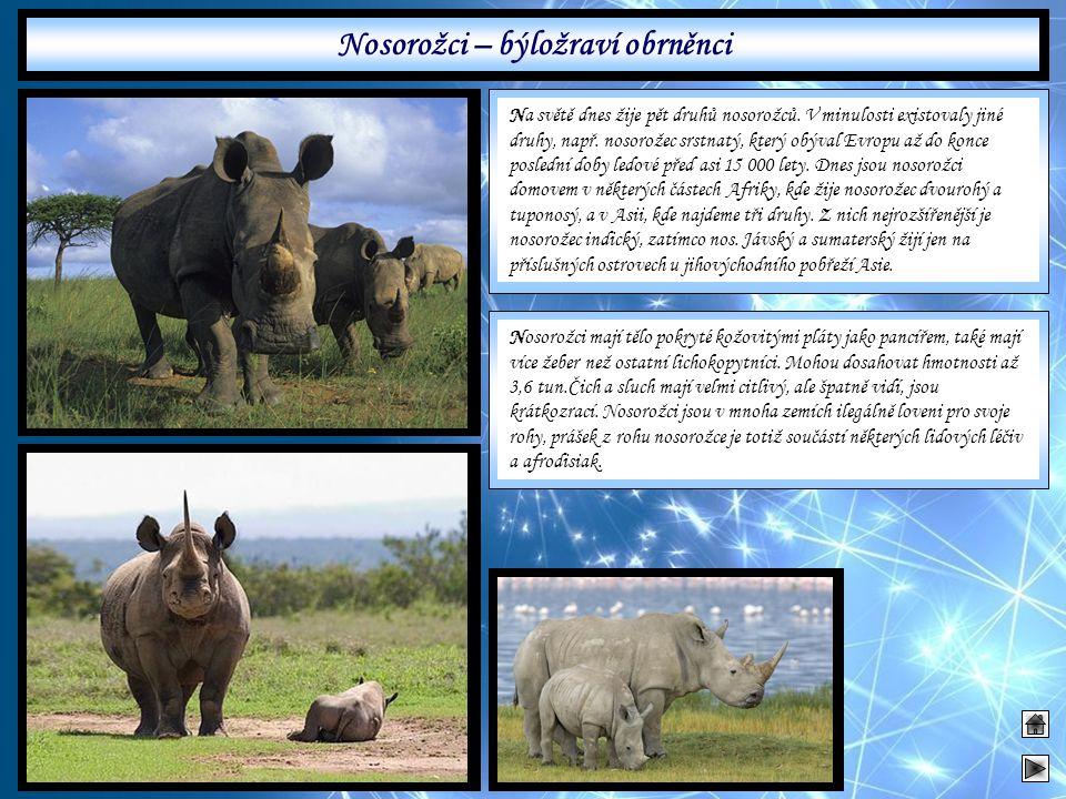 Nosorožci – býložraví obrněnci