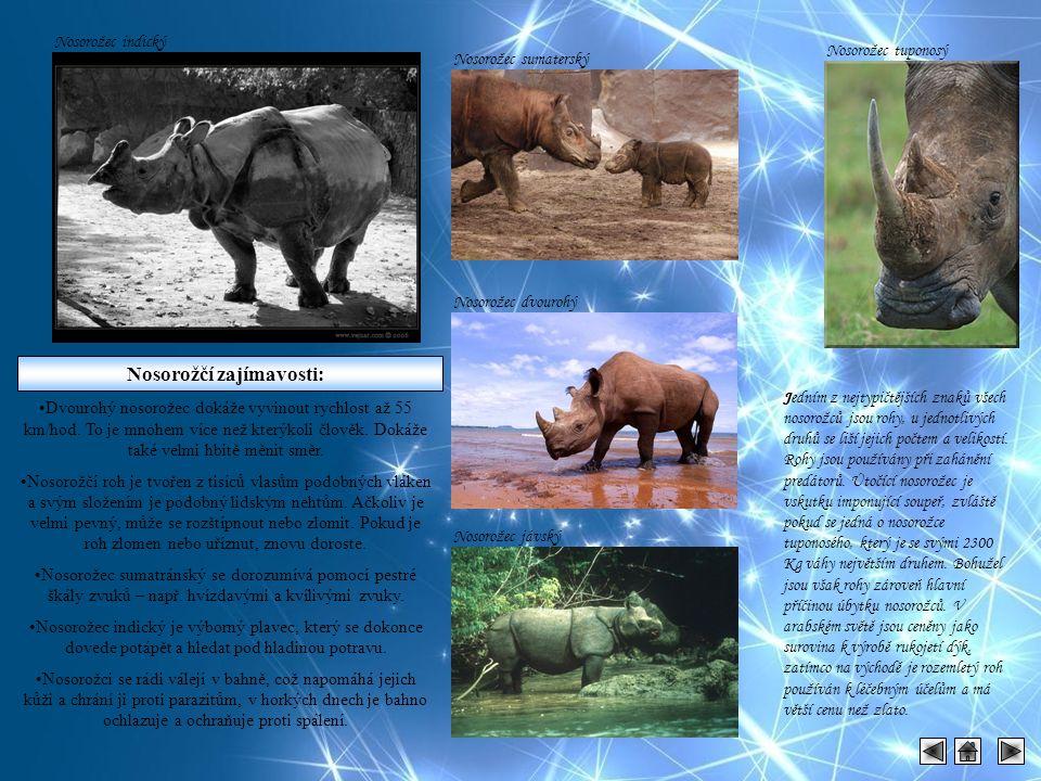 Nosorožčí zajímavosti: