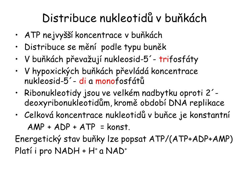 Distribuce nukleotidů v buňkách