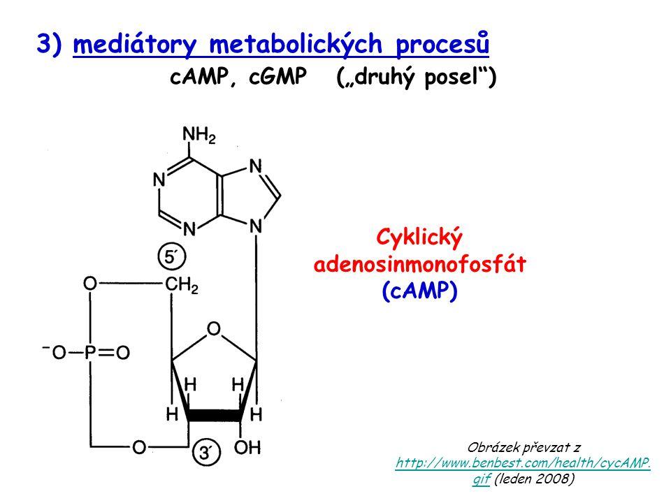 Cyklický adenosinmonofosfát (cAMP)