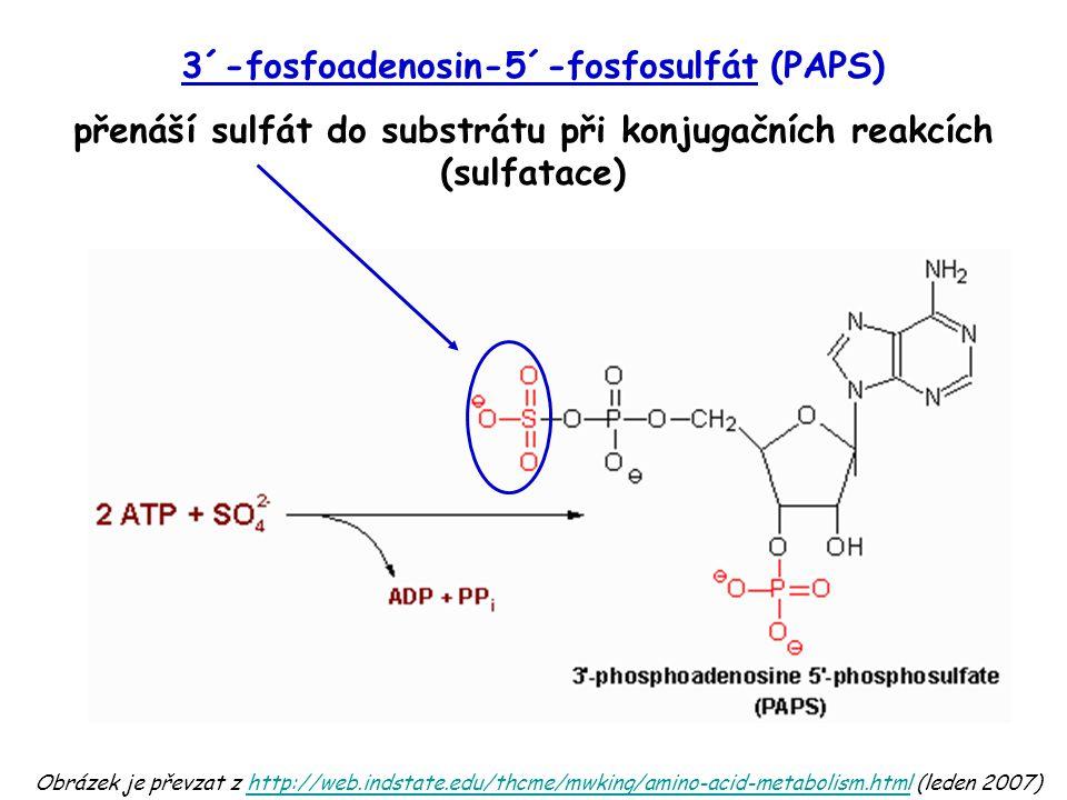 3´-fosfoadenosin-5´-fosfosulfát (PAPS)
