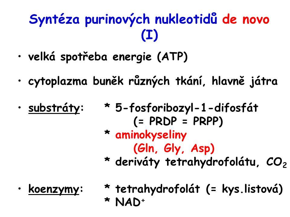Syntéza purinových nukleotidů de novo (I)