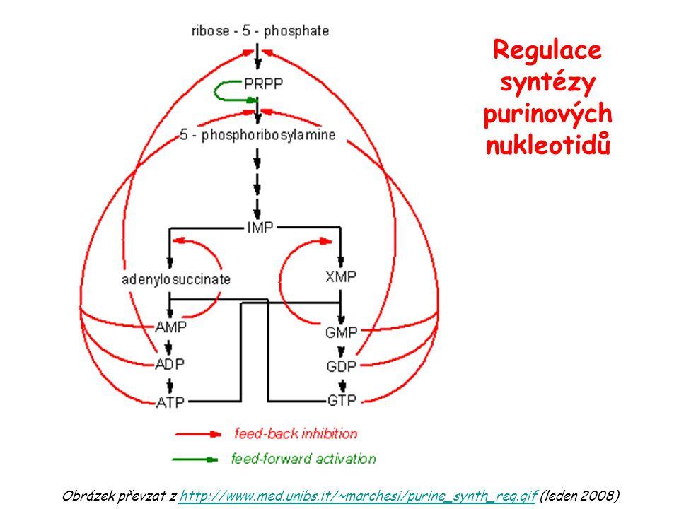 Regulace syntézy purinových nukleotidů