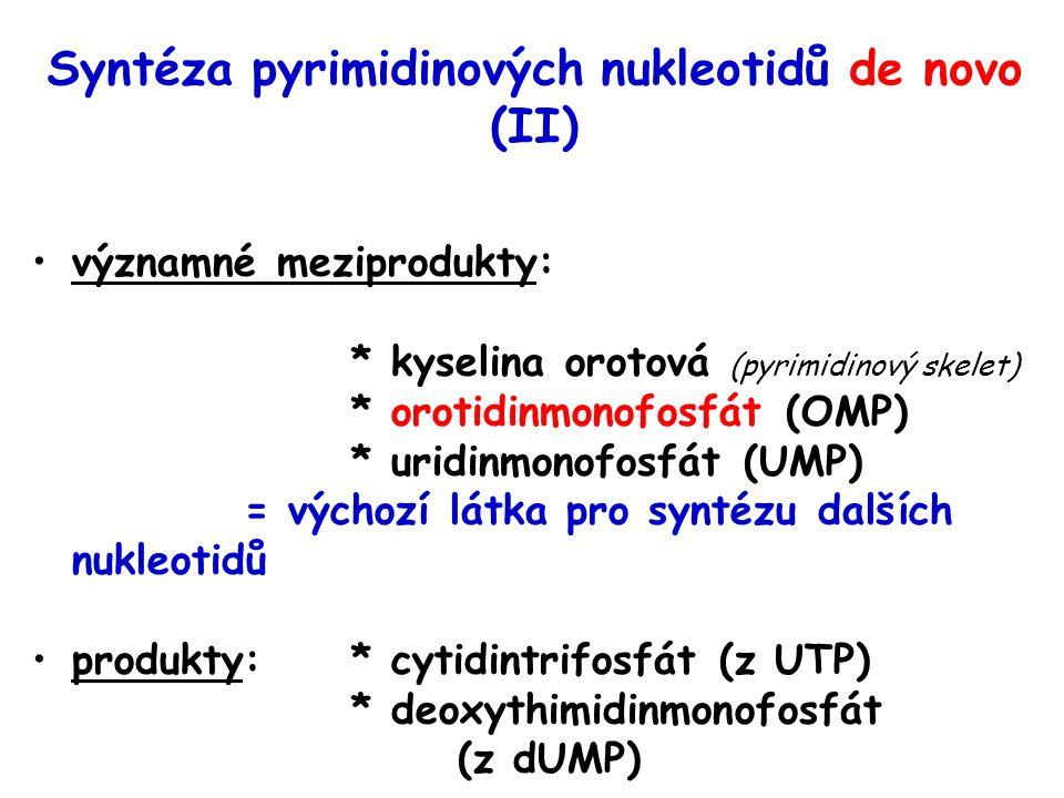 Syntéza pyrimidinových nukleotidů de novo (II)