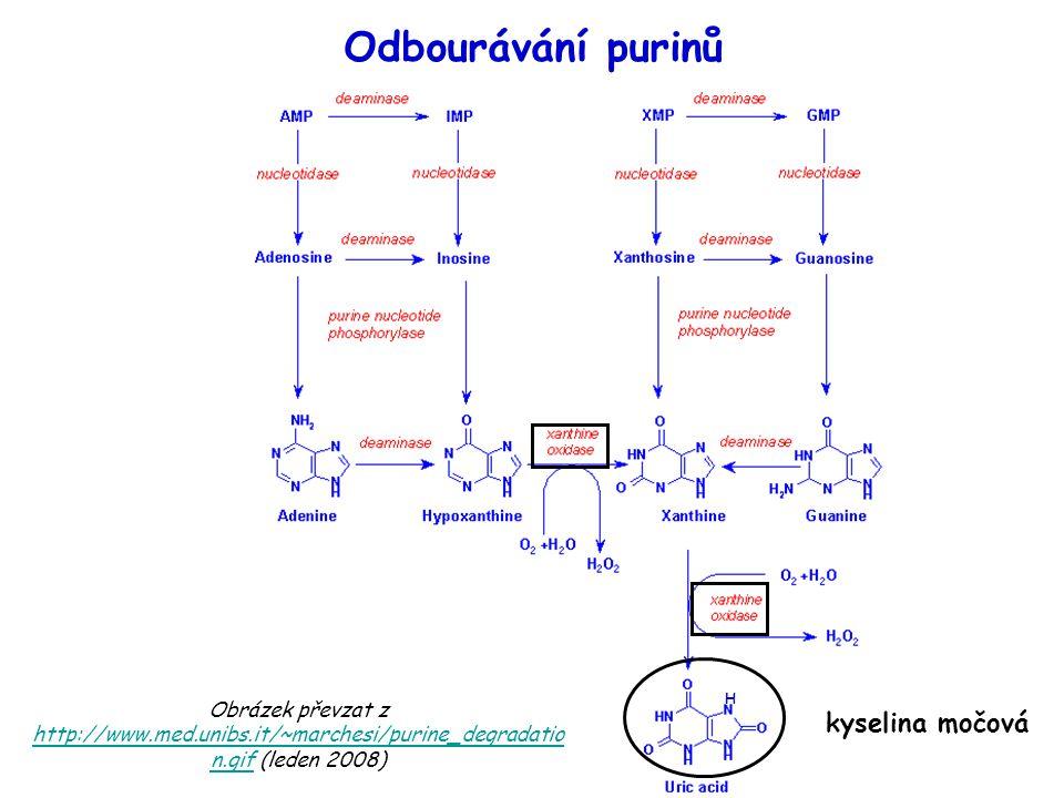 Odbourávání purinů kyselina močová