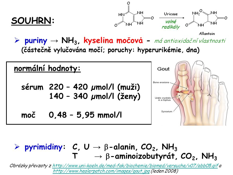 SOUHRN: puriny → NH3, kyselina močová - má antioxidační vlastnosti (částečně vylučována močí; poruchy: hyperurikémie, dna)