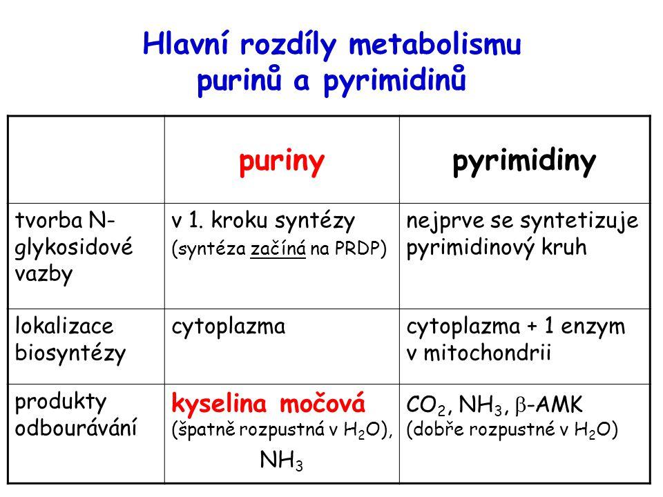 Hlavní rozdíly metabolismu purinů a pyrimidinů