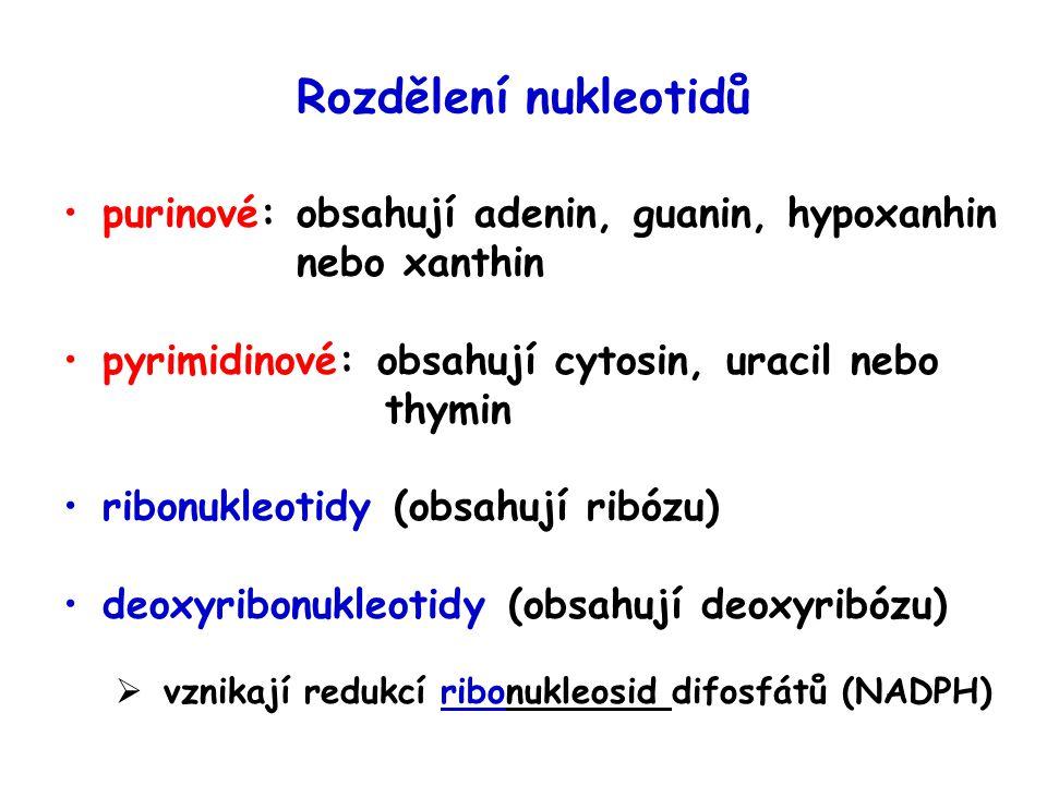 Rozdělení nukleotidů purinové: obsahují adenin, guanin, hypoxanhin nebo xanthin.