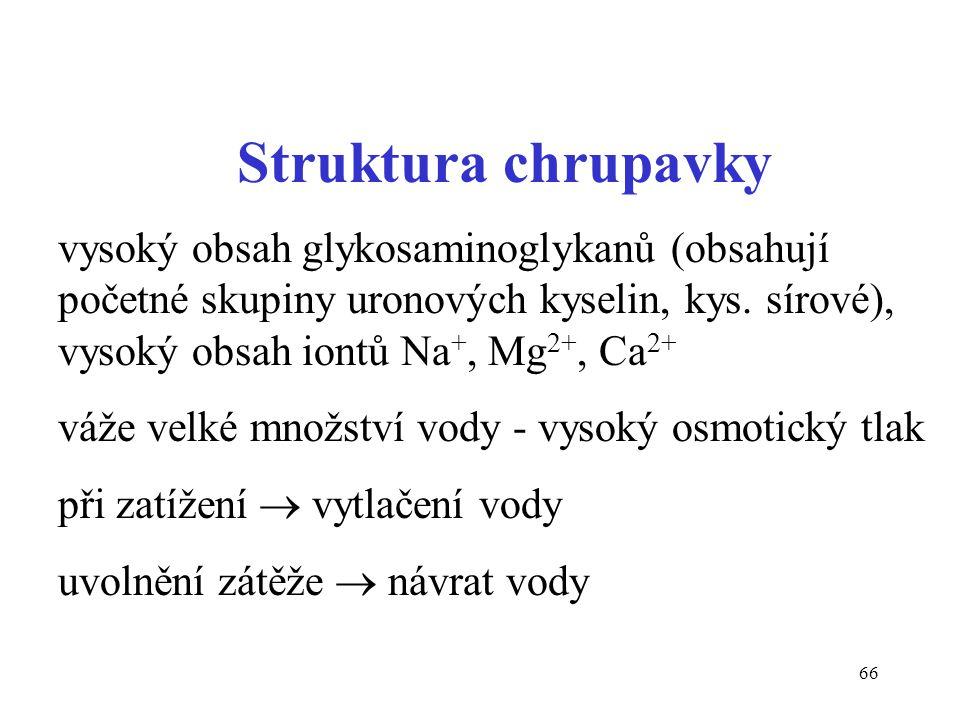 Struktura chrupavky vysoký obsah glykosaminoglykanů (obsahují početné skupiny uronových kyselin, kys. sírové), vysoký obsah iontů Na+, Mg2+, Ca2+