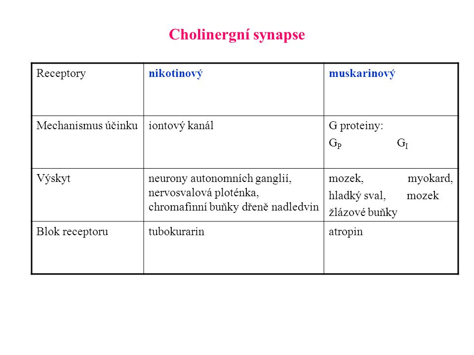 Cholinergní synapse Receptory nikotinový muskarinový