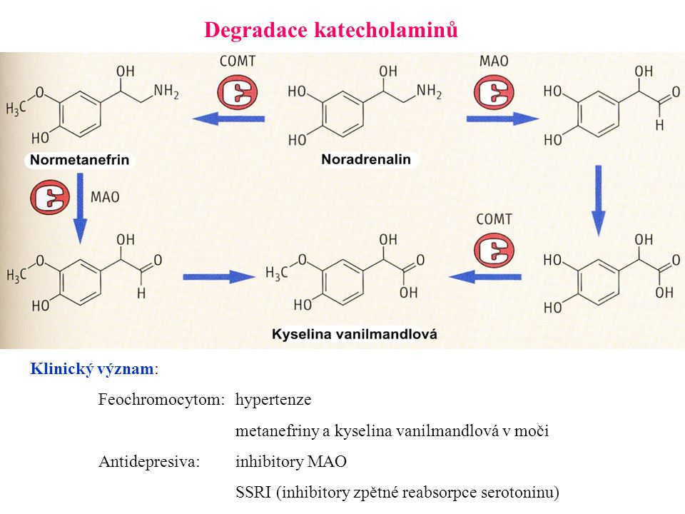 Degradace katecholaminů